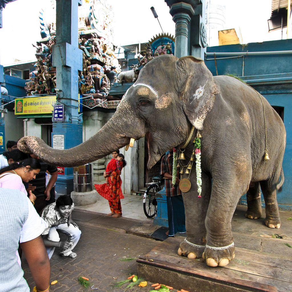 Elephant at vinayak temple pondicherry
