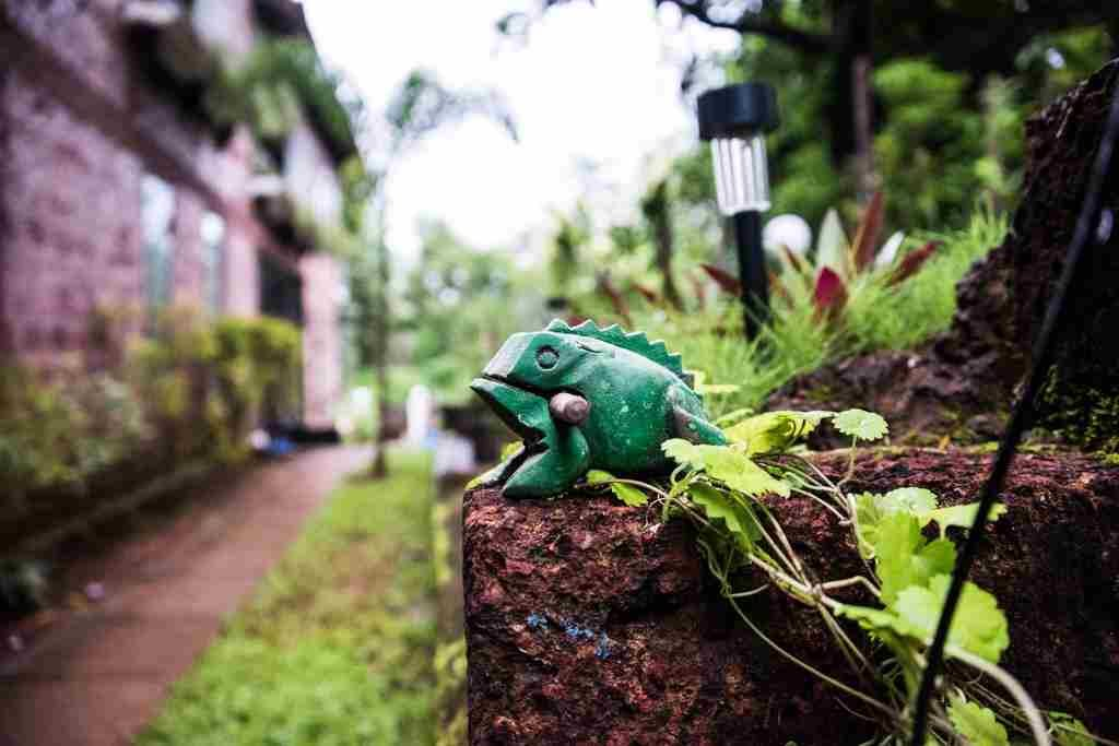hopping frog goa